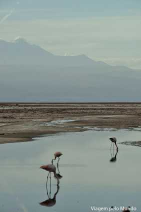 Lagunas Altiplanicas3