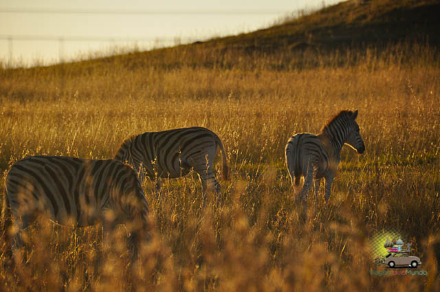 O que fazer em Drakensberg-12