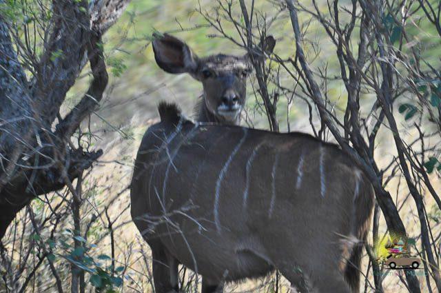 O que fazer em Drakensberg-15