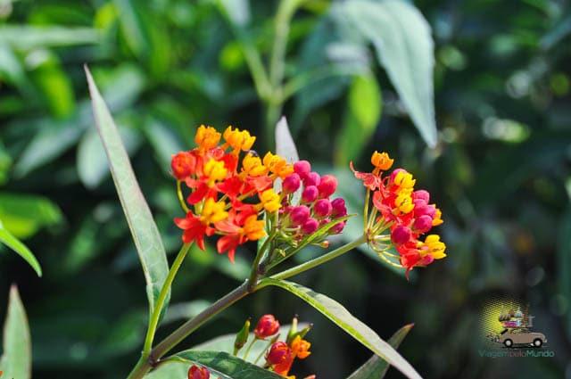 Flores baratas e lindas v at o ceasa em sp for Plantas baratas