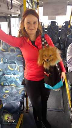 Passeio com cachorro de ônibus? Em SP pode!