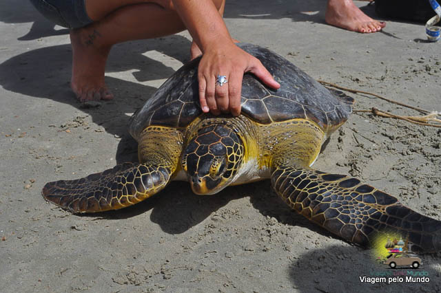 Resgate tartarugas Ubatuba