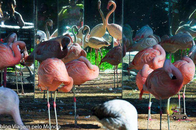 O que fazer em Foz do Iguaçu-21