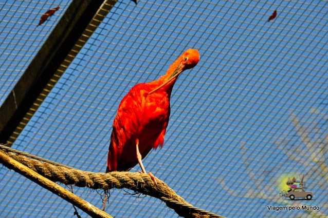 O que fazer em Foz do Iguaçu-23