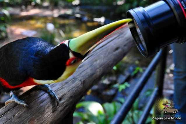 O que fazer em Foz do Iguaçu-24
