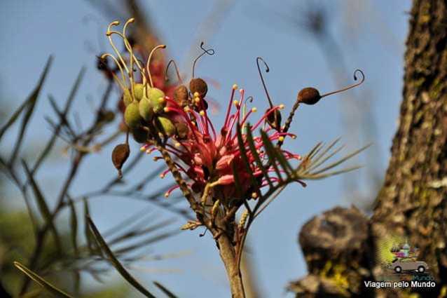O que fazer em Foz do Iguaçu-8