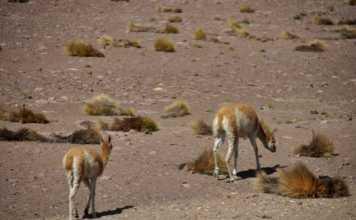 Geysers del Tatio Atacama