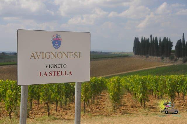 Degustação Vinícola Avignonese Toscana-3