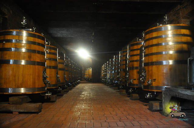 Degustação Vinícola Avignonese Toscana-4