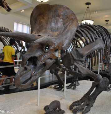Museu de História Natural de Nova York: o que ver