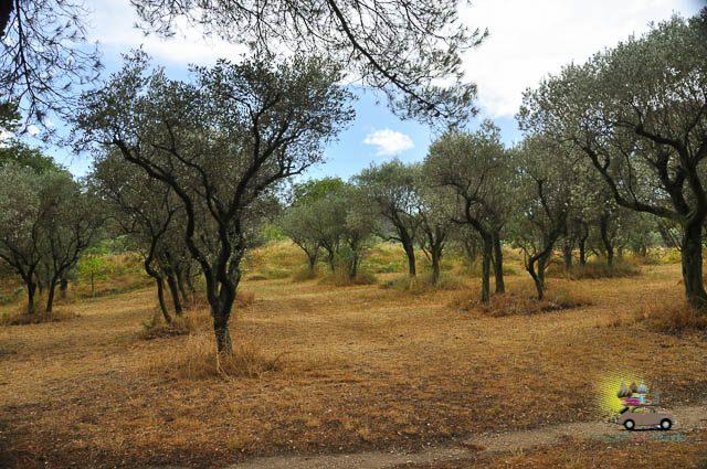 Saint-Remy de Provence-5