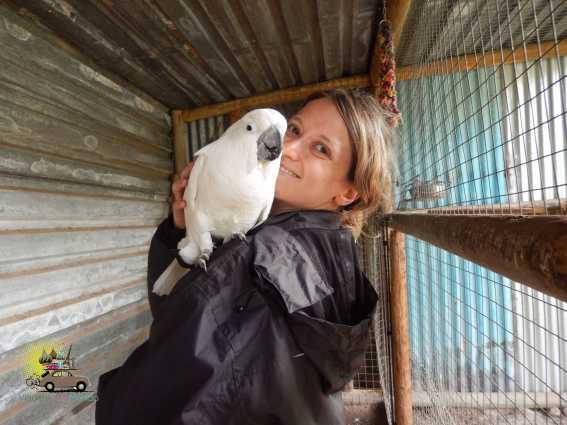 Trabalho voluntário na África do Sul com a GHS: African Horizon