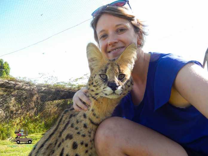 Trabalho voluntário com animais na África do Sul