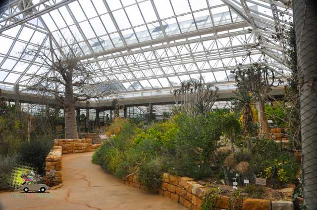 Kirstenbosch Gardens – Cape Town-2