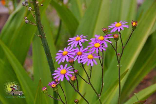 Kirstenbosch Gardens – Cape Town-5