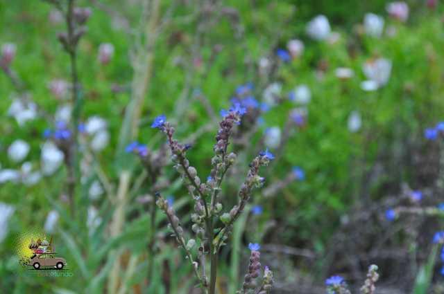 Kirstenbosch Gardens – Cape Town-6