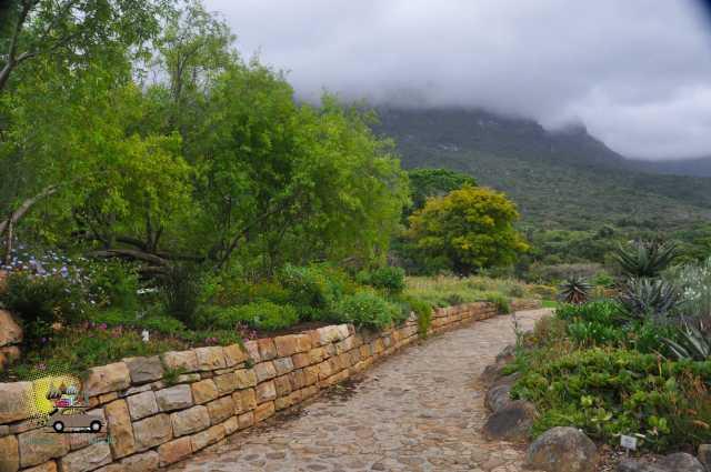 Kirstenbosch Gardens – Cape Town-7