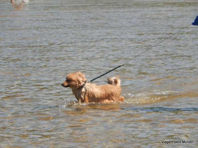 Viagem de carro com cachorro: dicas importantes