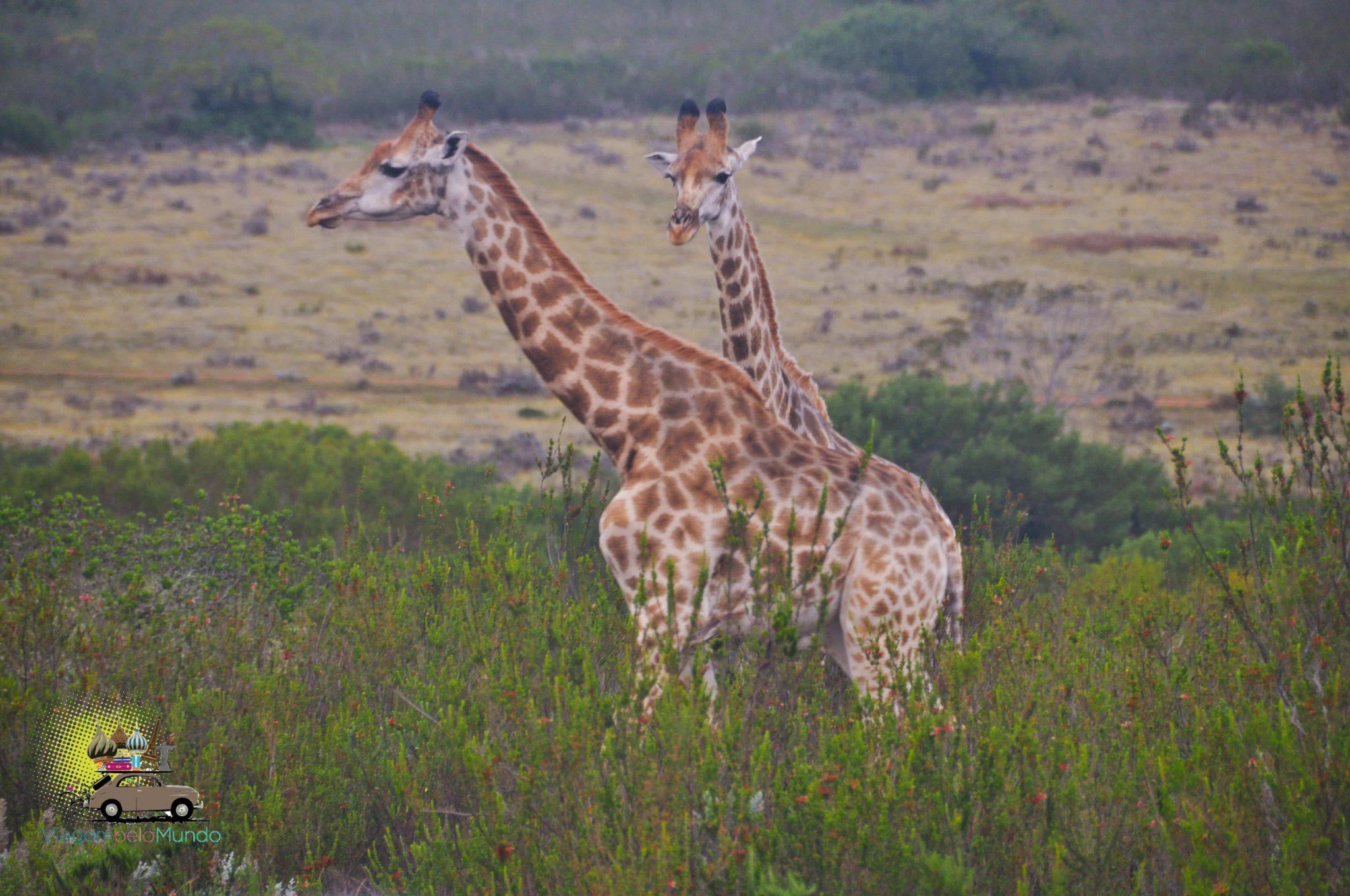 Gondwana: safári perto de Cape Town