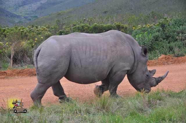 Safari Gondwana-4