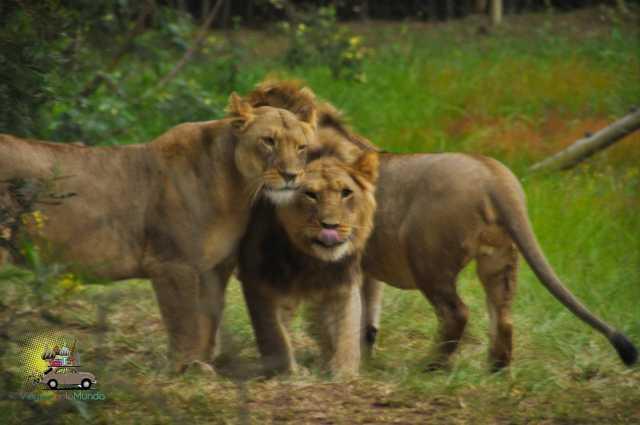 Safari Gondwana-7