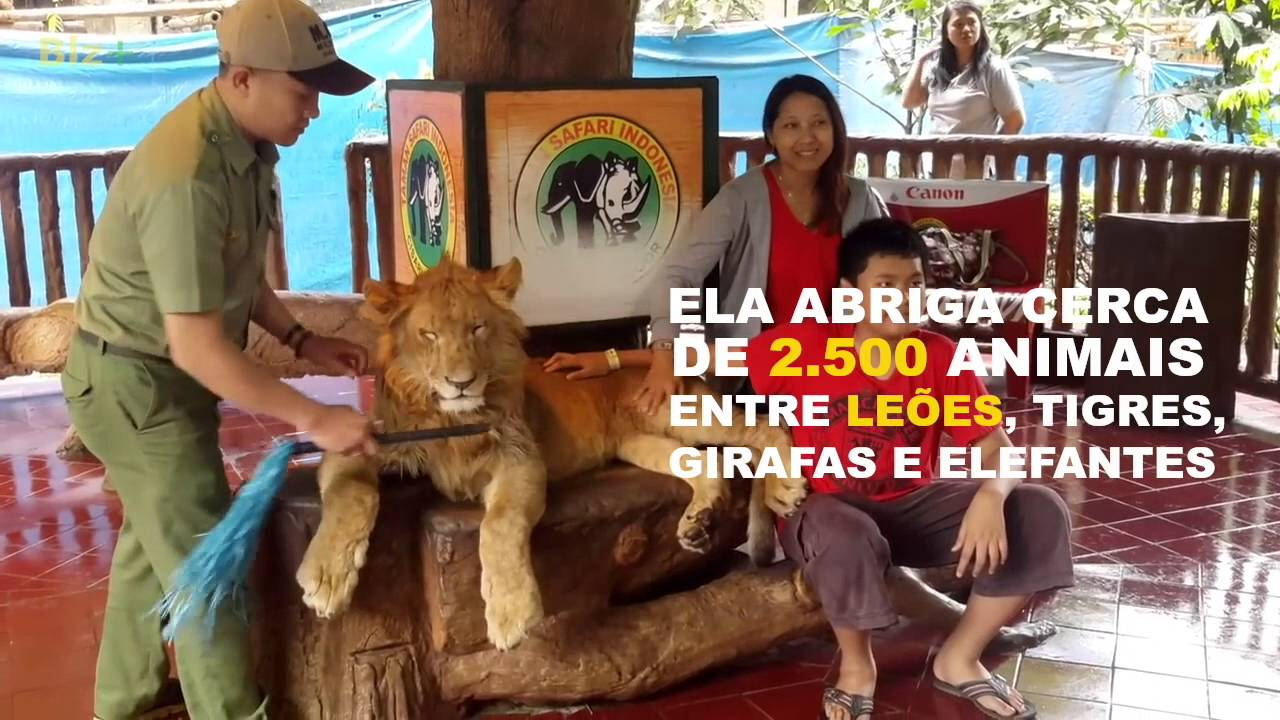 Turismo responsável com animais: quanto vale uma selfie?