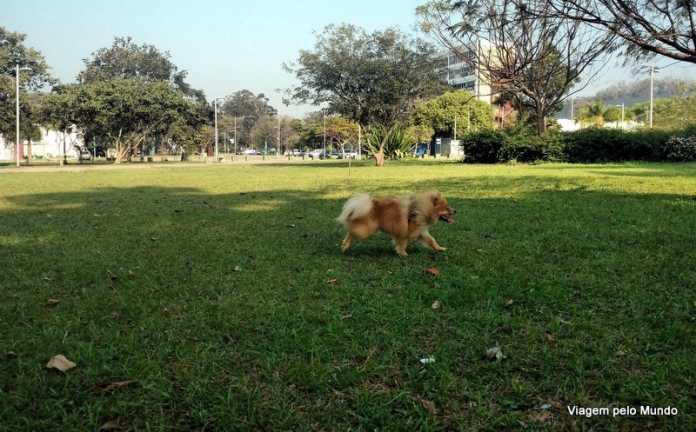 Cachorro perdido? Tem como evitar?