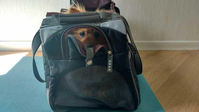 Cachorro na cabine do avião: bolsa de transporte, Viagem pelo Mundo blog