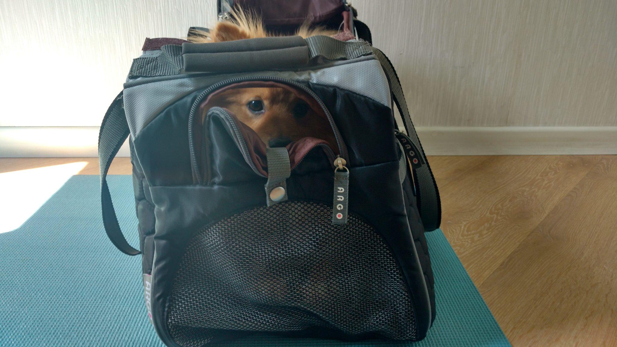 Cachorro na cabine do avião: bolsa de transporte
