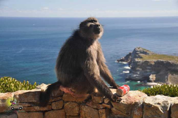 Apaixone-se pela África do Sul, Viagem pelo Mundo blog