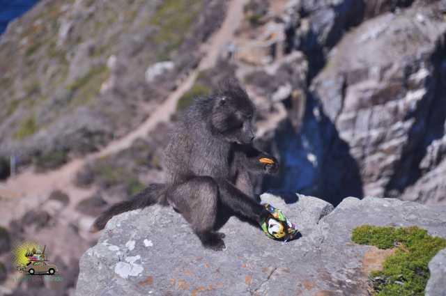 Cabo da Boa Esperança: sem vento e com babuínos!, Viagem pelo Mundo blog