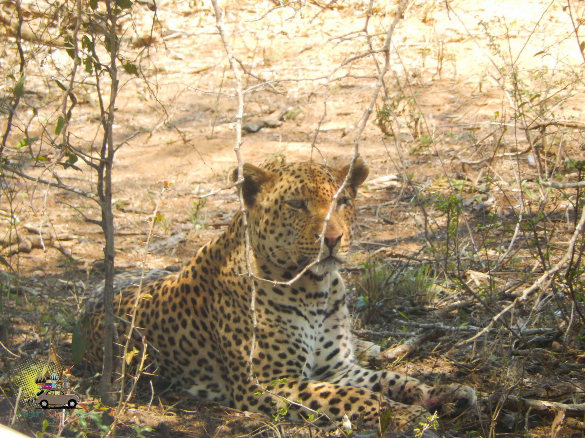 Kruger Park e o safári