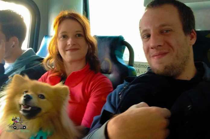 Cachorro ônibus SP
