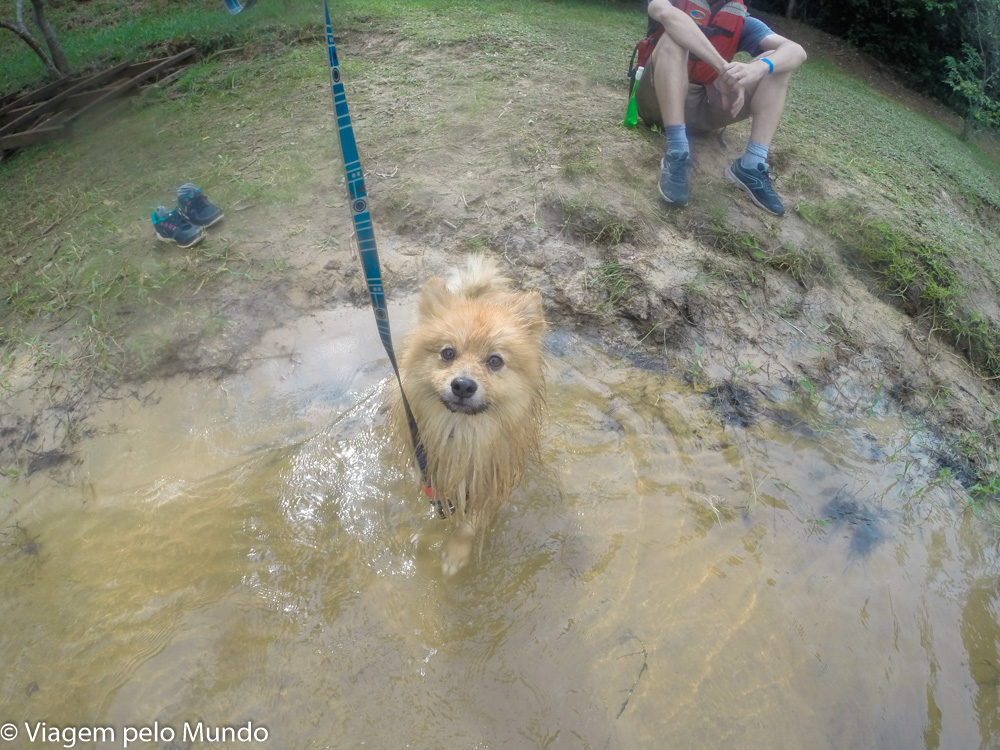 cachorro rafting Brotas