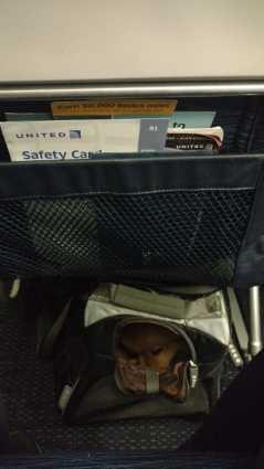 Viagem EUA com pet na cabine: United