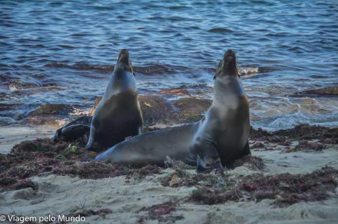 leão marinho La Jolla San Diego