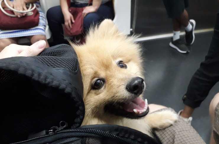 cachorro metrô de São Paulo