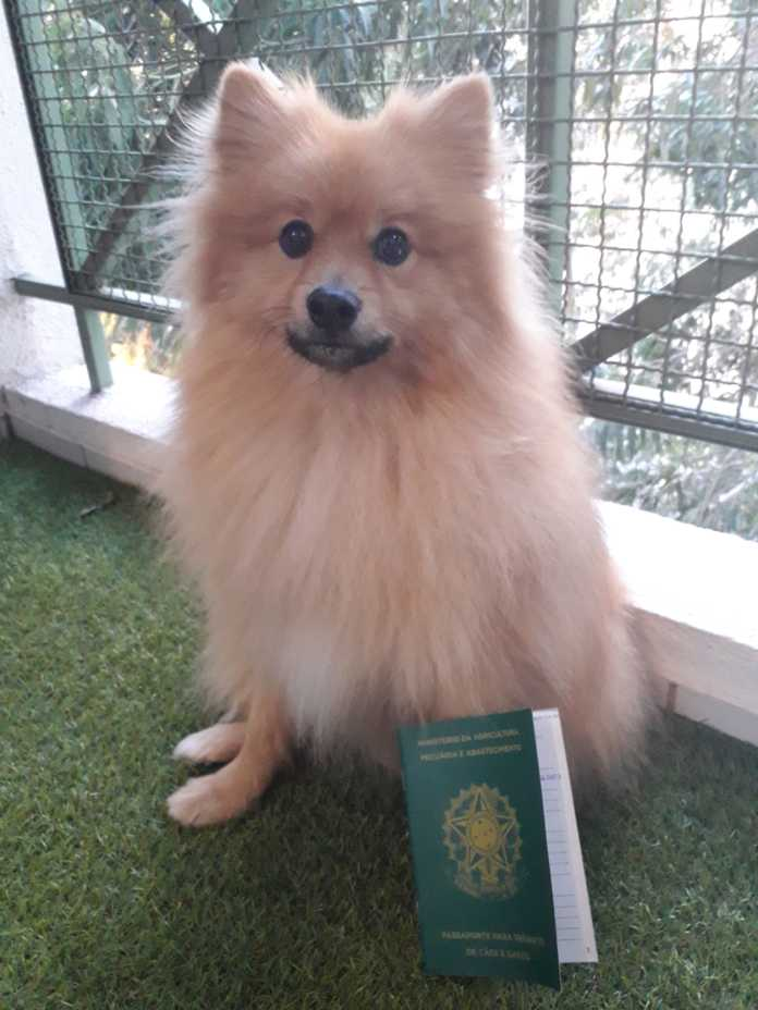 Passaporte pet