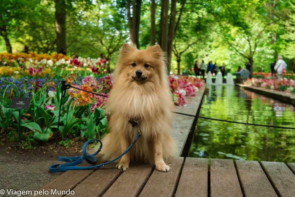Parque das Tulipas com cachorro
