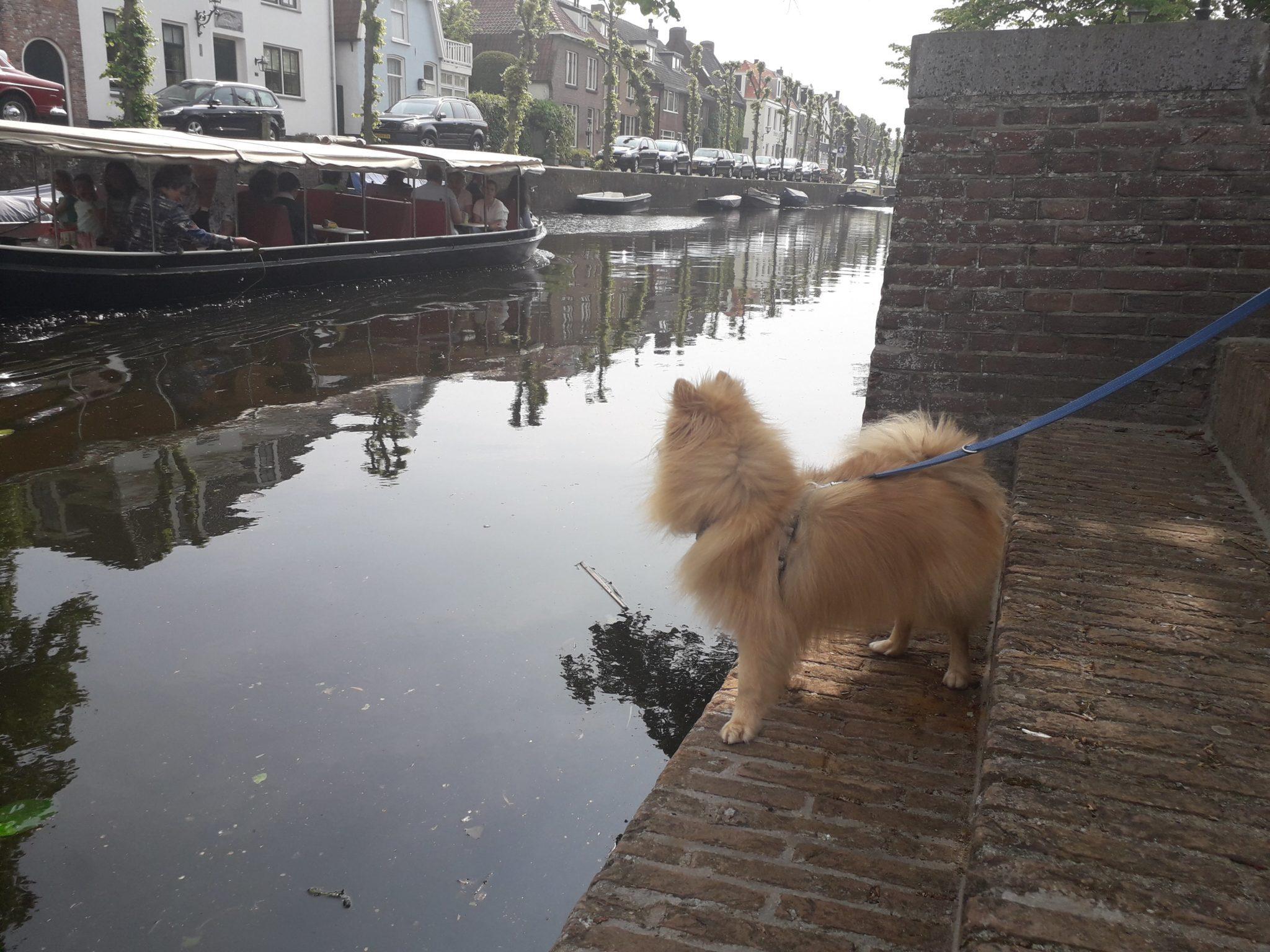 viagem cachorro Naarden