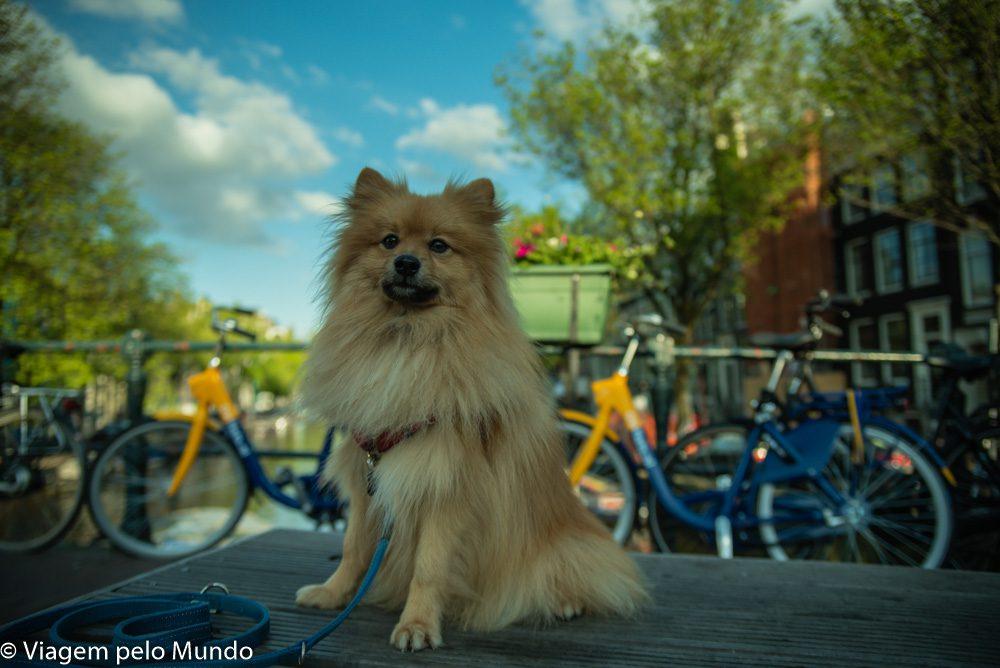 Viagem cachorro Amsterdam